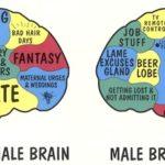 cervello maschio femmina