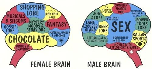 cervello-maschio-femmina