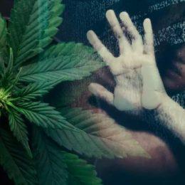Sesso e marijuana: quali sono gli effetti positivi e quelli negativi tra cannabinoidi e sfera erotica